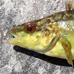 FjordFish