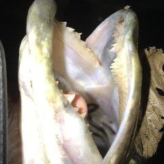 Ung fiskeren