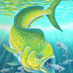 FiskeFranz