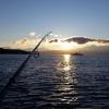 Swedishfishguy