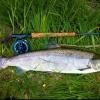 Saltvannsfluer inspirasjons... - last post by max_fishing
